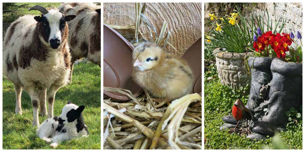 Easter lambs, chicks and flowers