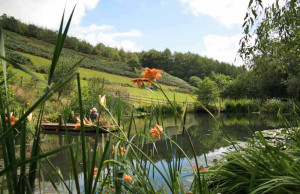Huxtable Farm B&B pond on Devon Wildlife Trail