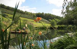 Huxtable Farm B&B pond on Devon Wildlife Trail