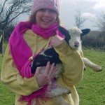 Cuddling Jacob sheep lamb at lambing time