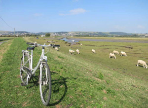 Cycling the Braunton Burrows, Devon
