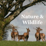 Wildlife and nature of North Devon & Exmoor