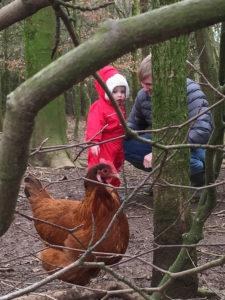 Meet the hens