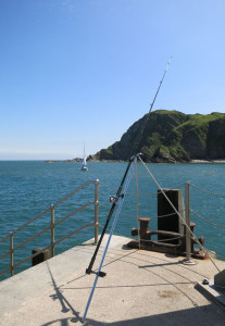 Sea fishing at Ilfracombe harbour Devon