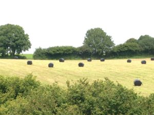 Baled & wrapped