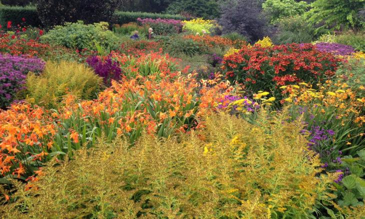 RHS Rosemoor hot garden