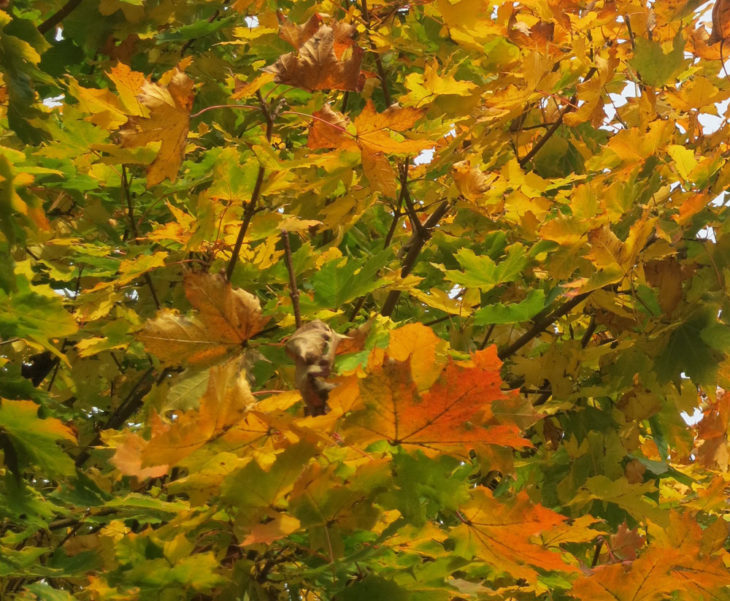 Autumn leaves at North Devon B&B
