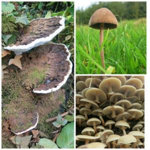 A variety of fungi in the woodland at B&B near Barnstaple