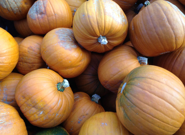 Pumpkins - Halloween and October Half Term