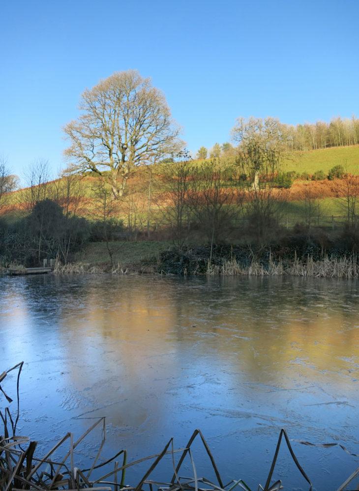 Huxtable Farm B&B, Devon wildlife pond with ice