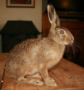 Hare at Huxtable Farm B&B Devon