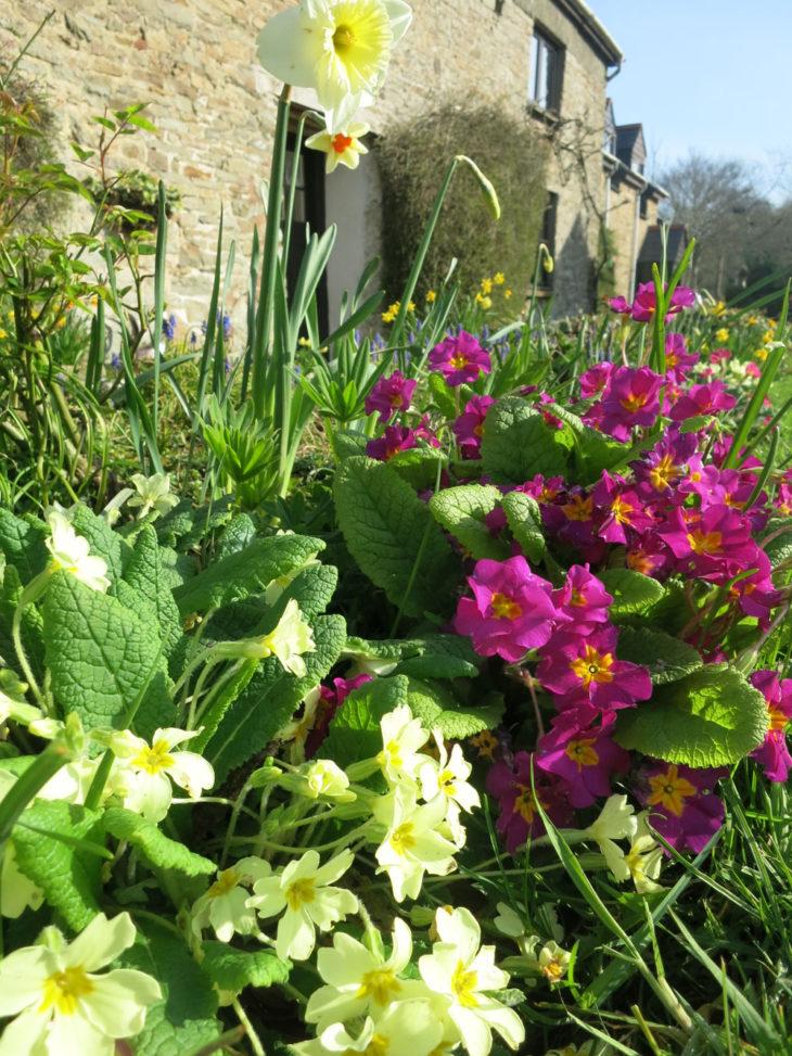 Spring flowers at Huxtable Farm