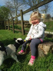 Bottle feeding orphan tame lambs at Huxtable Farm B&B North Devon