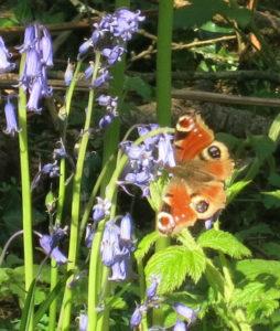 Butterfly & Blubells