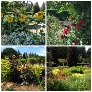 RHS Rosemoor Gardens, rose festival and hot garden