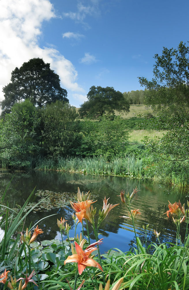 Wildlife pond at Huxtable Farm B&B, West Buckland, Devon