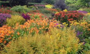 Visit North Devon Gardens including RHS Rosemoor