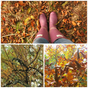 Autumn leaves (Autumn walks in North Devon)