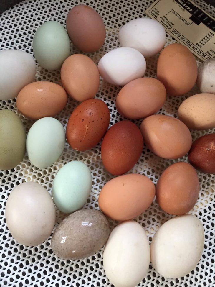 Colourful eggs in the incubator