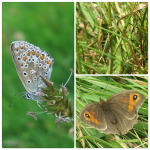 Butterflies & grasshopper at Huxtable Farm B&B, Devon/Exmoor