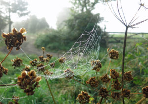 Spiders web and seeds