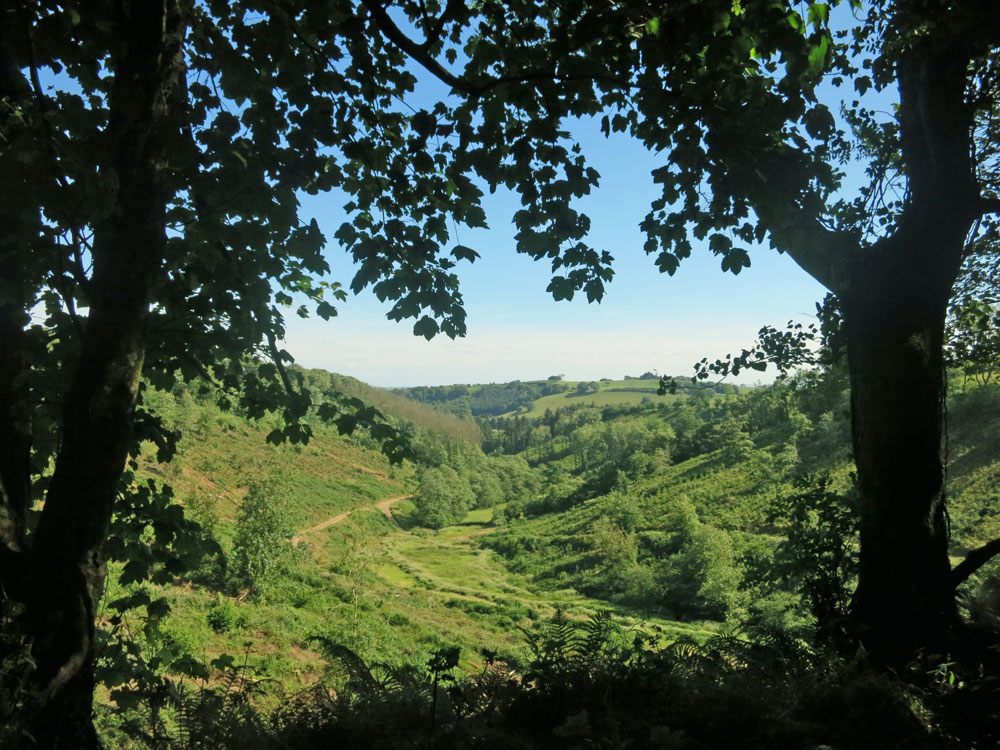 Valley view through trees on Huxtable Farm Devon Wildlife Trail, now that our neighbour has felled a woodland area