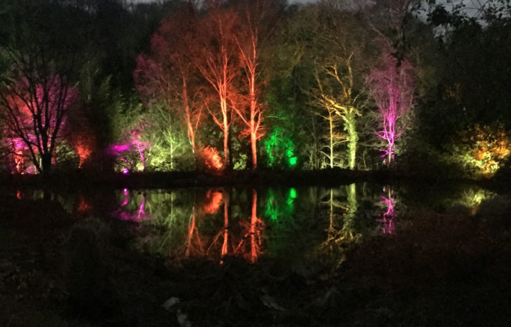RHS Rosemoor lights