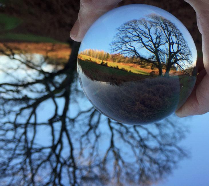 Crystal Ball photo at Huxtable Farm