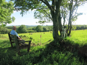 Bench with view on Huxtable Farm Devon Wildlife Walk