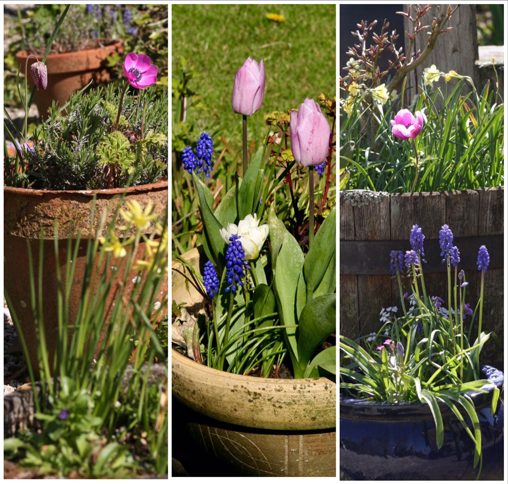 Flower Pots at Huxtable Farm B&B