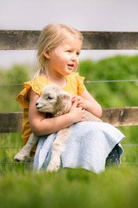 Tame lamb cuddle