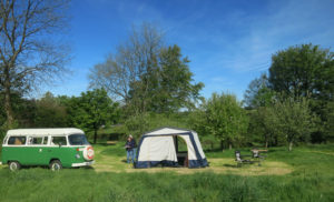 Campers in the orchard