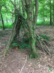 Build a den in the woodland
