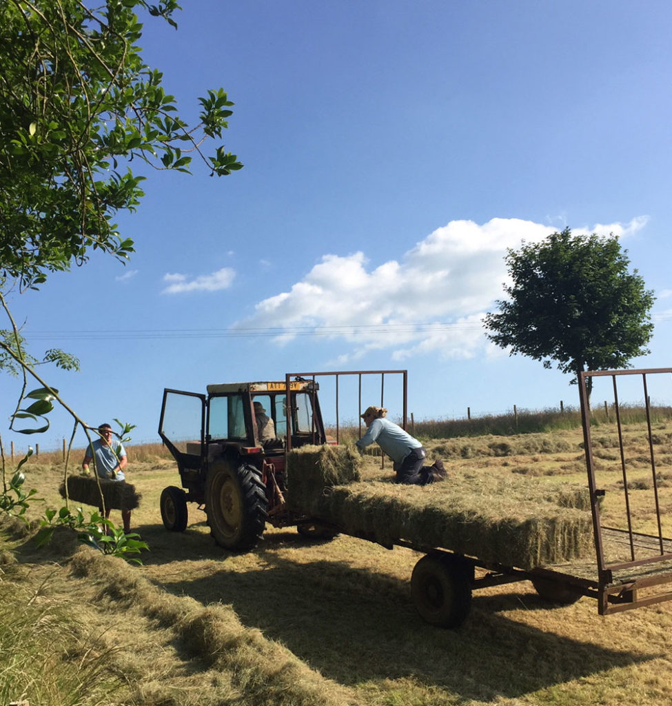 Small Bale Hay North Devon